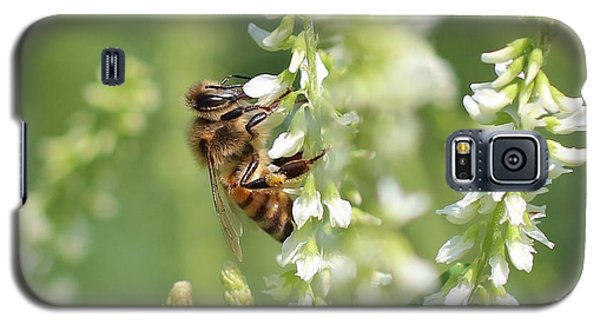 Honeybee On Sweet Clover Galaxy S5 Case by Lucinda VanVleck