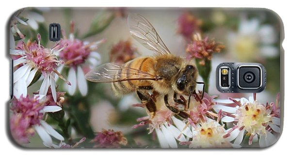 Honeybee Sipping Nectar On Wild Aster Galaxy S5 Case