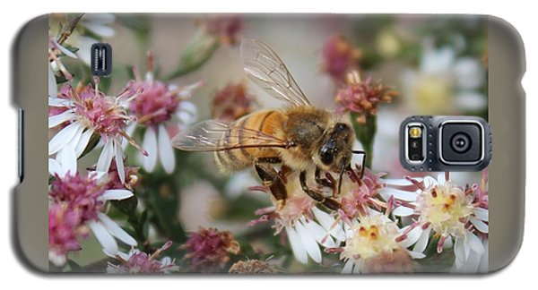 Honeybee Sipping Nectar On Wild Aster Galaxy S5 Case by Lucinda VanVleck