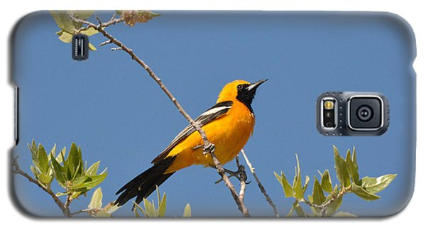 Hooded Oriole Galaxy S5 Case