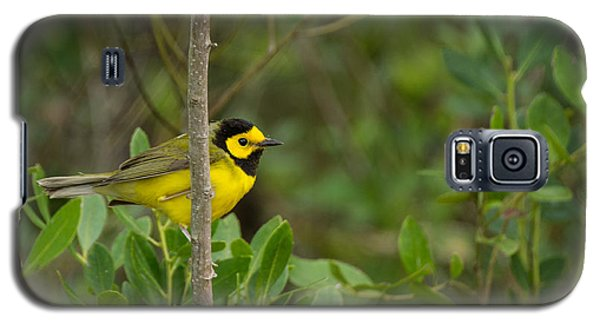 Hooded Warbler Galaxy S5 Case