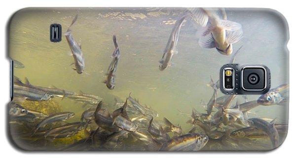 Hooligan Underwater Galaxy S5 Case