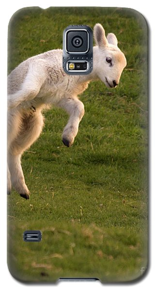 Sheep Galaxy S5 Case - Hop Hop Hop by Angel Ciesniarska