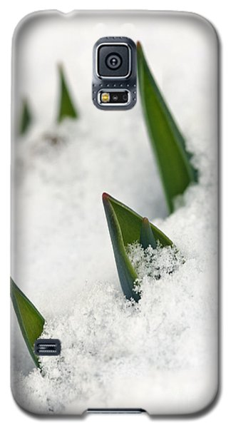 Hope Galaxy S5 Case by Dee Cresswell