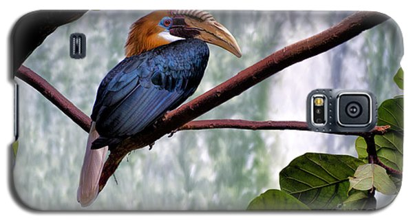 Hornbill In Paradise Galaxy S5 Case