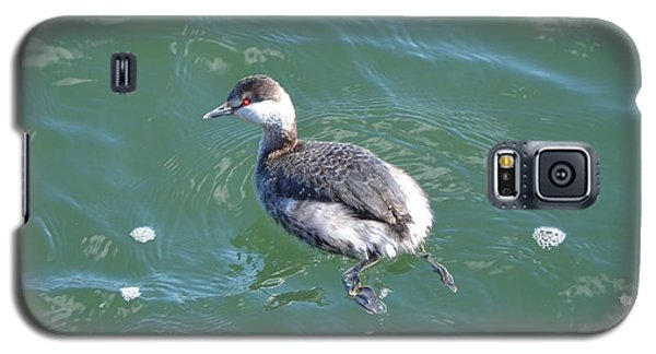 Horned Grebe Galaxy S5 Case by James Petersen