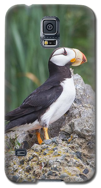 Horned Puffin Galaxy S5 Case
