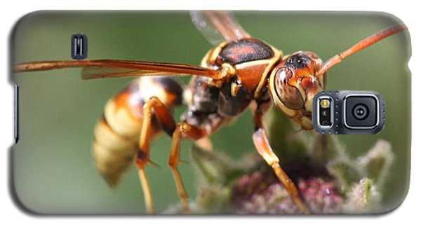 Galaxy S5 Case featuring the photograph Hornet On Flower by Nathan Rupert
