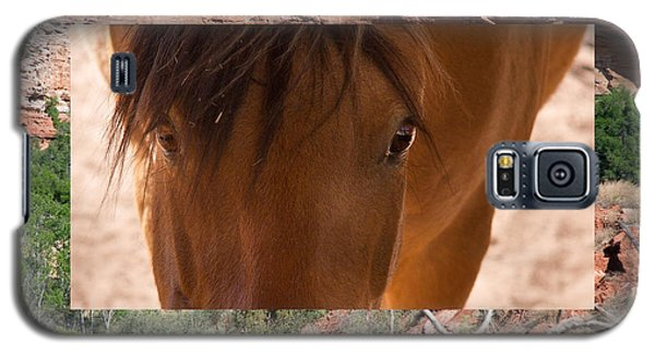 Horse And Canyon Galaxy S5 Case