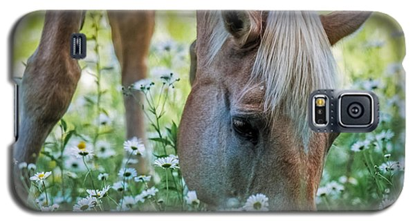 Horse And Daisies Galaxy S5 Case by Paul Freidlund