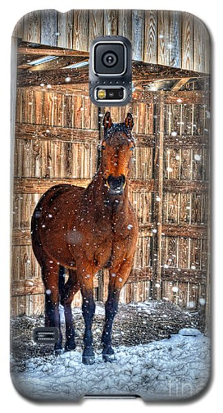 Horse And Snow Storm Galaxy S5 Case