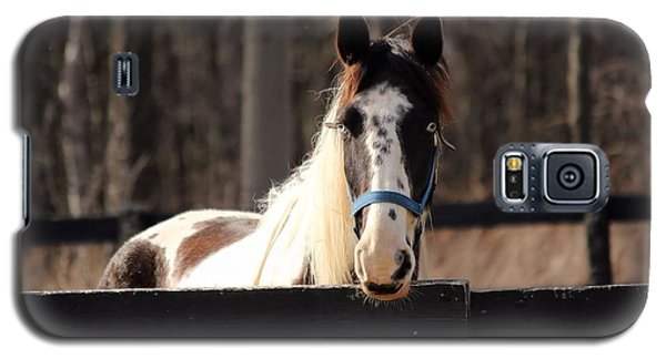 Horse At The Gate Galaxy S5 Case