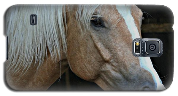 Horse Feathers Galaxy S5 Case by Barbara S Nickerson