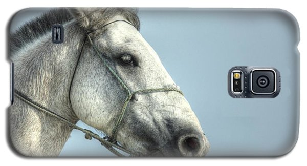 Galaxy S5 Case featuring the photograph Horse Head-shot by Eti Reid
