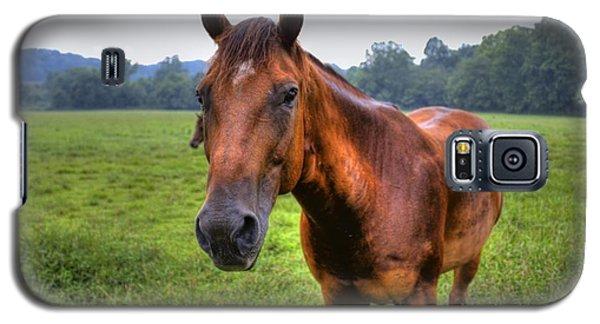 Horse In A Field Galaxy S5 Case by Jonny D