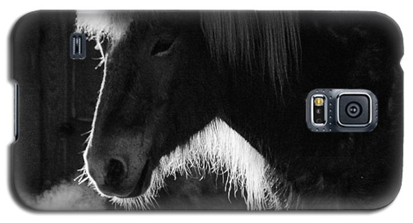 Horse In Black And White Square Format Galaxy S5 Case by Matthias Hauser