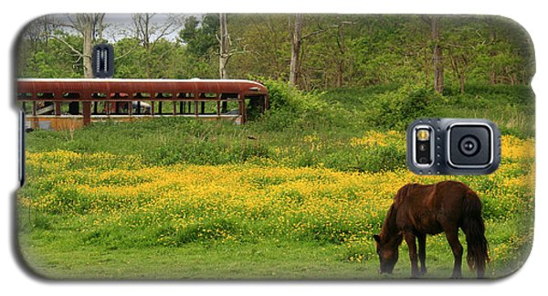 Horse In The Meadow Near Weetamoo Galaxy S5 Case by Andrew Pacheco
