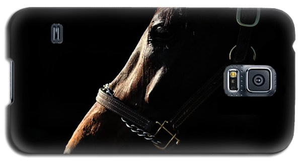 Horse In The Shadows Galaxy S5 Case
