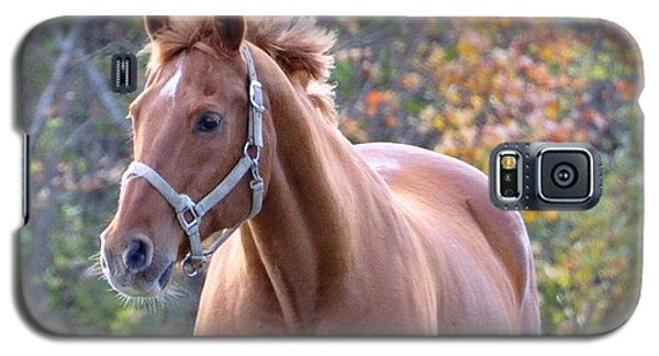 Galaxy S5 Case featuring the photograph Horse Muscle by Glenn Gordon