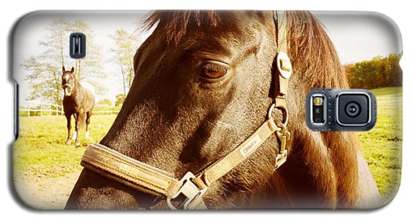 Horse Portrait Galaxy S5 Case by Matthias Hauser