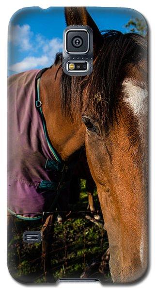 Horse Portrait With Purple Blanket Galaxy S5 Case