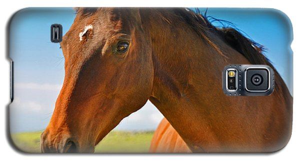 Galaxy S5 Case featuring the photograph Horse by Sabine Edrissi