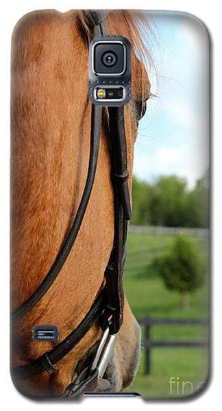 Horse View Galaxy S5 Case