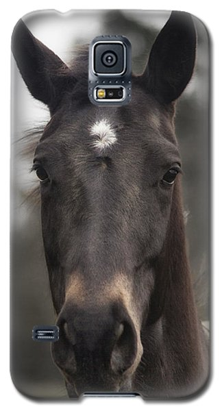 Horse With Gentle Eyes Galaxy S5 Case by Belinda Greb