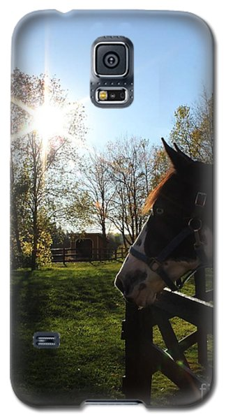 Horse With Sunburst Galaxy S5 Case