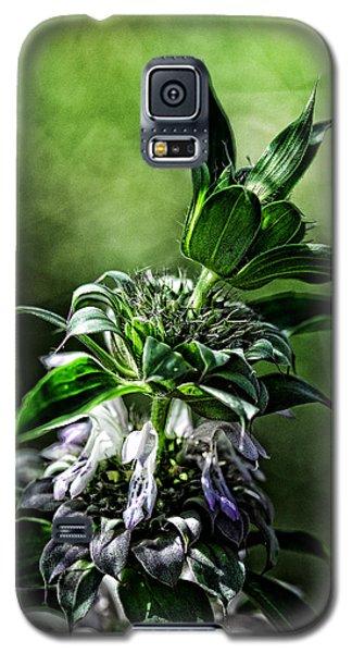 Horsemint Galaxy S5 Case by Karen Slagle