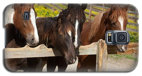Horses Behind A Fence Galaxy S5 Case