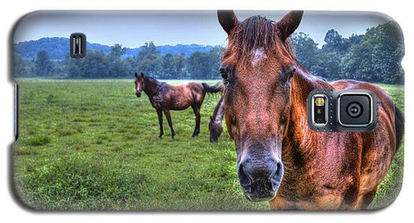 Horses In A Field Galaxy S5 Case by Jonny D