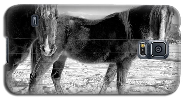 Horses In Winter Coats Galaxy S5 Case by Joan Herwig