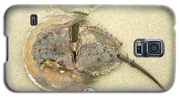 Galaxy S5 Case featuring the photograph Horseshoe Crab On The Beach by Suzanne Powers