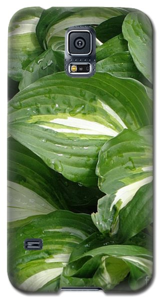Galaxy S5 Case featuring the photograph Hosta Leaves After The Rain by Christina Verdgeline