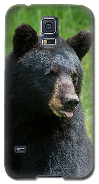 Hot Day In Bear Country Galaxy S5 Case