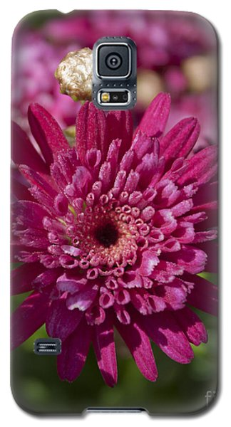 Hot Pink Chrysanthemum Galaxy S5 Case