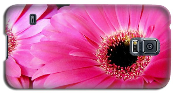 Hot Pink Gerber Daisies Macro Galaxy S5 Case