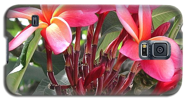 Hot Pink Plumeria Galaxy S5 Case by Karen Nicholson