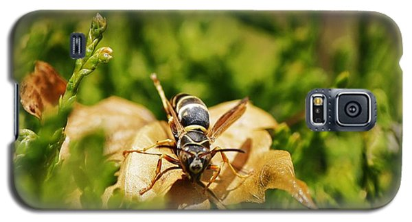 Galaxy S5 Case featuring the photograph Hot Wasp... by Al Fritz