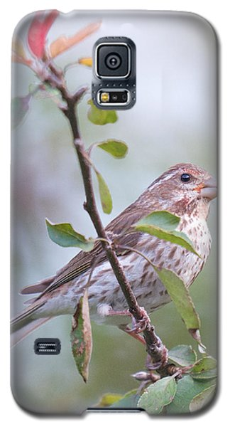 House Sparrow In The Apple Tree Galaxy S5 Case