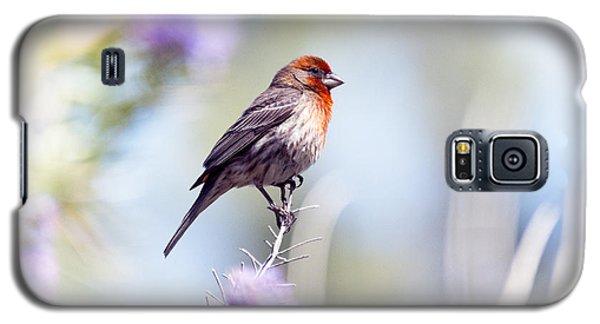 House Sparrow Galaxy S5 Case