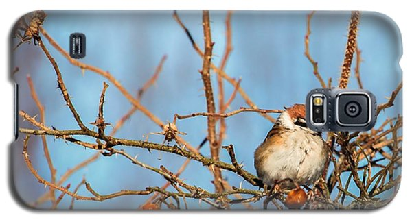 Galaxy S5 Case featuring the photograph House Sparrow by Rose-Maries Pictures
