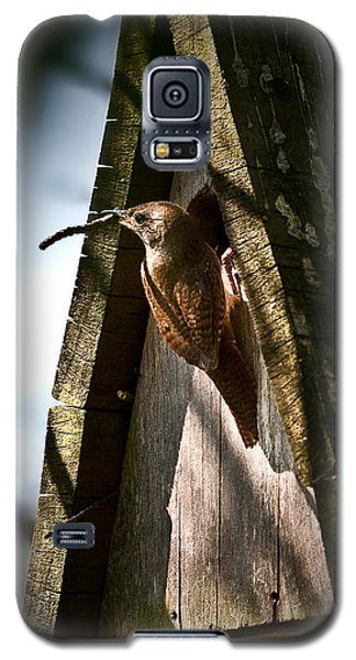 House Wren At Nest Box Galaxy S5 Case by  Onyonet  Photo Studios