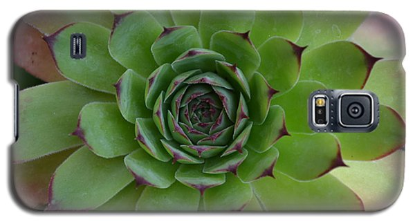 Houseleek Sempervivum Galaxy S5 Case