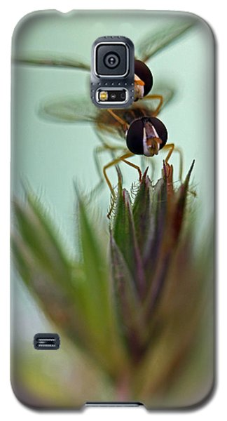 Hover Bugs Galaxy S5 Case