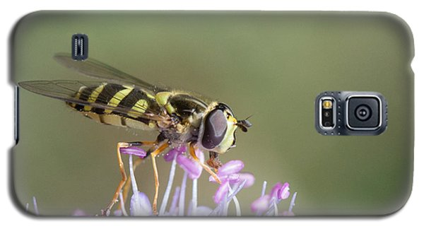 Galaxy S5 Case featuring the photograph Hoverefly - Syrphus Vitripennis by Jivko Nakev
