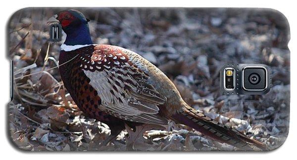 Howard County Pheasant Galaxy S5 Case