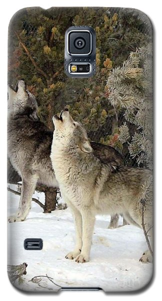 717a Howling Wolves  Galaxy S5 Case