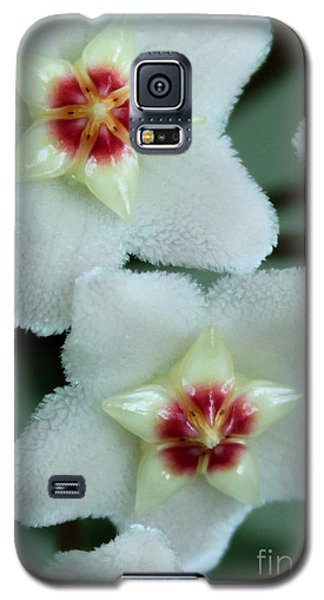Hoya Galaxy S5 Case